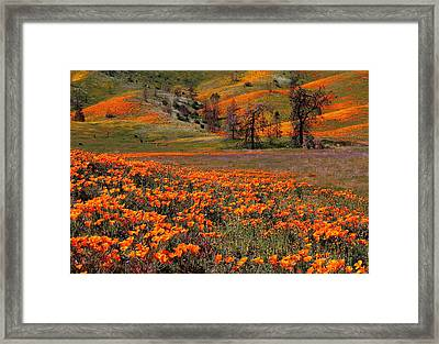 Hills Of Orange Near Antelope Valley Poppy Preserve In California Framed Print