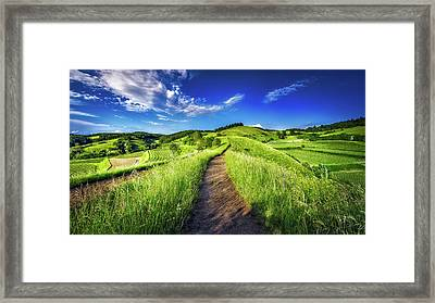 Hills Of Summer Framed Print by Claudio Testa