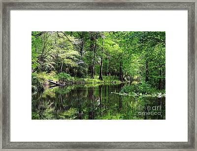 Hillsborough River Vista Framed Print
