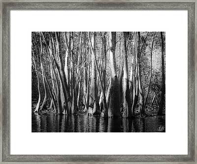 Hillsborough Zen Framed Print