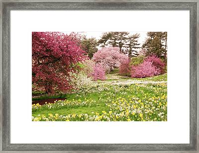 Framed Print featuring the photograph Hillside Bloom by Jessica Jenney