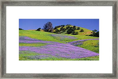 Hillside Carpet Framed Print