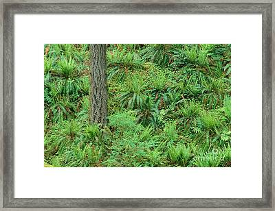 Hillside Ferns Framed Print by Greg Vaughn - Printscapes