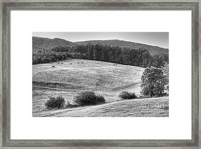 Hillside Hay Framed Print