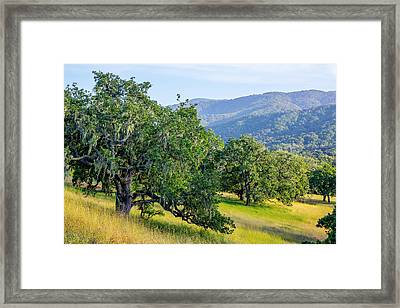 Hillside Oaks Framed Print
