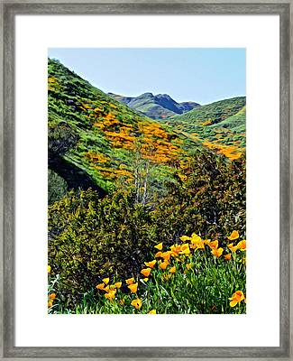 Hillside Poppies - Impressions One Framed Print