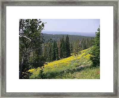 Hillside Wildflowers Framed Print