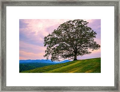 Hilltop Oak Framed Print