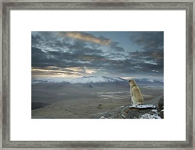 Himalayan Dog Framed Print by Sebastian Wahlhuetter