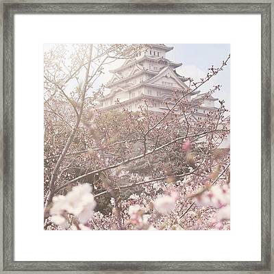 Himeji Castle At Cherry Blossom Framed Print