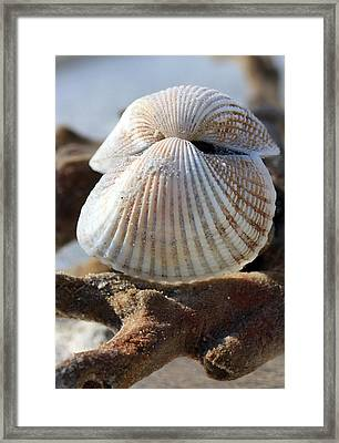 Hinged Together Framed Print by Mary Haber