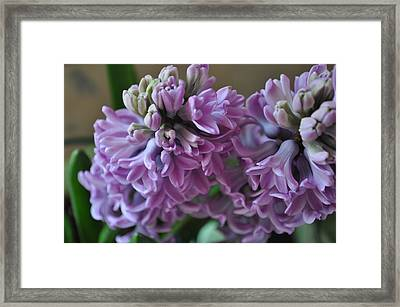 Hint Of Spring Framed Print by JAMART Photography