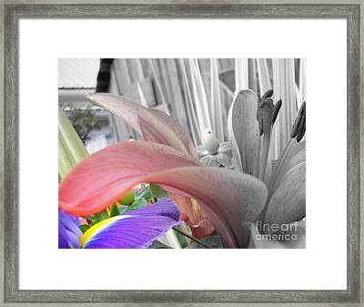 Hint Of Spring Framed Print by Sian Lindemann