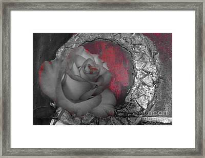 Hints Of Red - Rose Framed Print