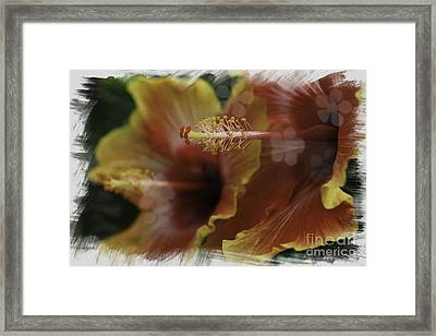 Framed Print featuring the photograph Hippi Hibiscus by Lori Mellen-Pagliaro