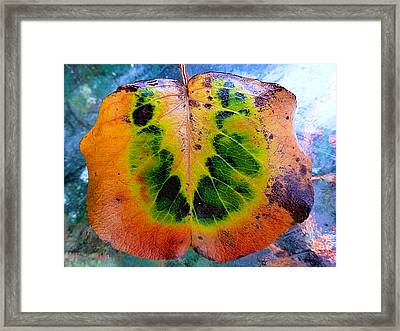 Hippie Leaf Framed Print