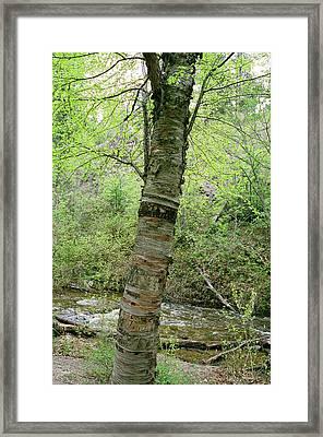 Hippie Tree Framed Print