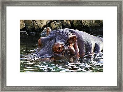 Hippo 3779_2 Framed Print