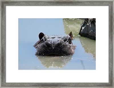 Framed Print featuring the photograph Hippo by JT Lewis