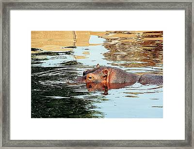 Hippo Scope Framed Print by Jan Amiss Photography
