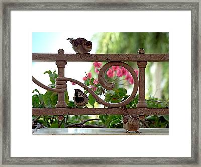 His Eye Is On The Sparrow Framed Print by Marie Hicks