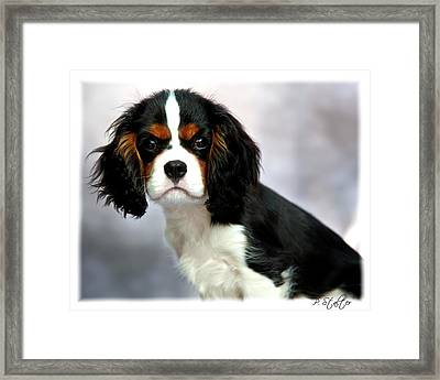 His Highness Framed Print by Patricia Stalter