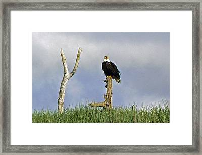 Framed Print featuring the photograph His Majesty by Pamela Patch