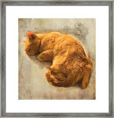 Framed Print featuring the photograph His Place In The Sun by Bellesouth Studio