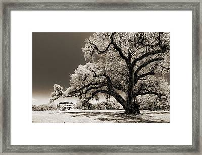 Historic Drayton Hall In Charleston South Carolina Live Oak Tree Framed Print by Dustin K Ryan