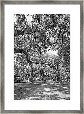 Historic Lane 3 Bw Framed Print