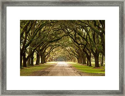 Historic Live Oak Trees Framed Print