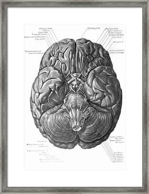 Historical Surgical Chart Framed Print