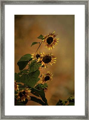 History Of Sunflowers Framed Print by Theresa Campbell