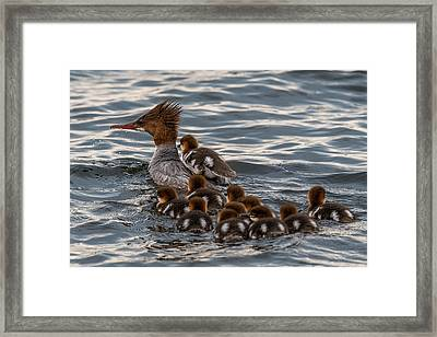 Hitch Hiker Framed Print by Paul Freidlund