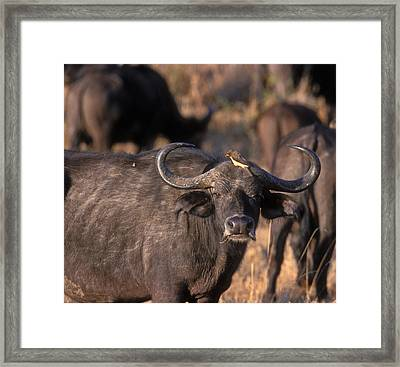 Hitching A Ride 1 Framed Print by Sandra Bronstein