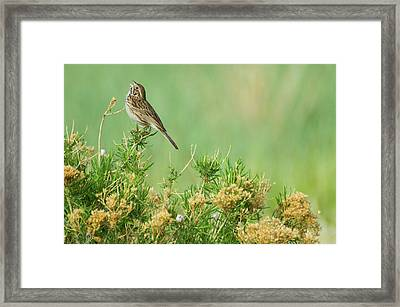 Framed Print featuring the photograph Hitting The High Note by John De Bord