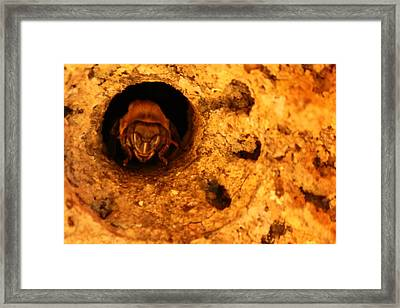 Hive Guard Framed Print by Erick Gomes Anastacio