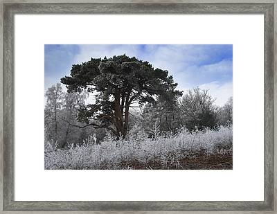 Hoar Frost Framed Print by Hazy Apple