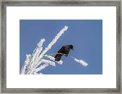 Hoarfrost And The Crow Framed Print