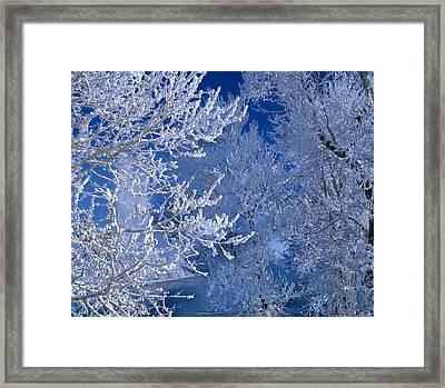 Hoarfrost Framed Print by Leland D Howard
