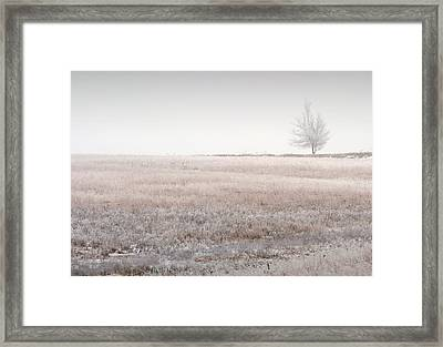 Hoarfrost Pasture Framed Print by Fred Lassmann
