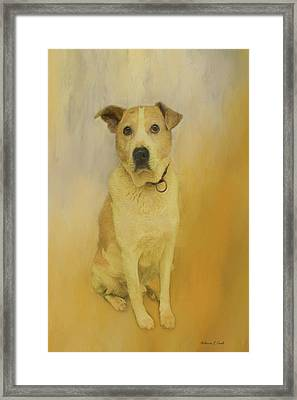 Framed Print featuring the photograph Hobbit The Harrier Hound by Bellesouth Studio