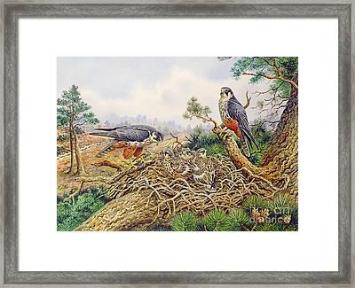 Hobbys At Their Nest Framed Print by Carl Donner