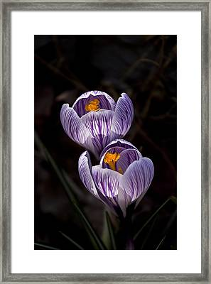 Hocus Crocus Framed Print by Shawn Young