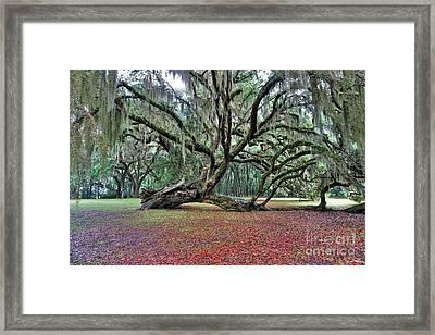 Hofwyl-broadfield Plantation2 Framed Print