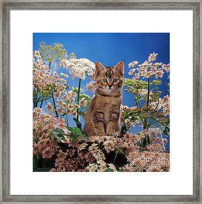 Hogging All The Hogweed Framed Print