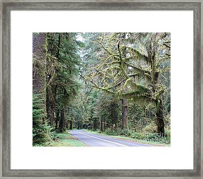 Hoh Rain Forest Road Framed Print