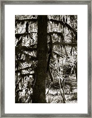 Hoh Rain Forest Framed Print by Sonja Anderson