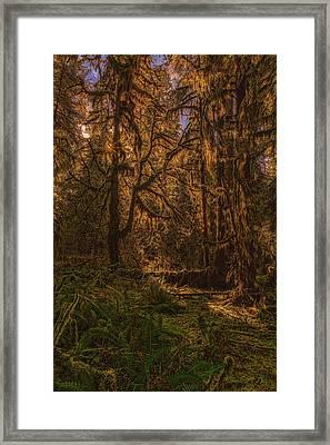 Hoh Rain Forest Framed Print