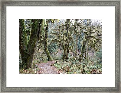 Hoh Rainforest Framed Print